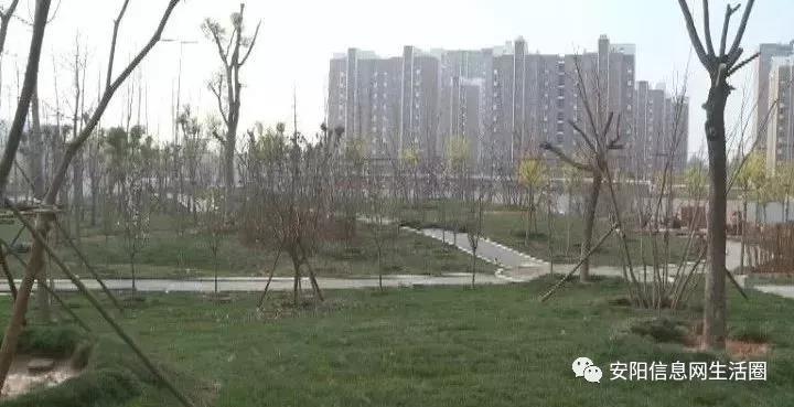 安阳这个区将新增两处游园,快看看是你家门口吗?
